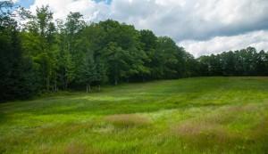 tree-free fields