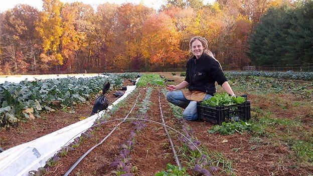 garden, farm