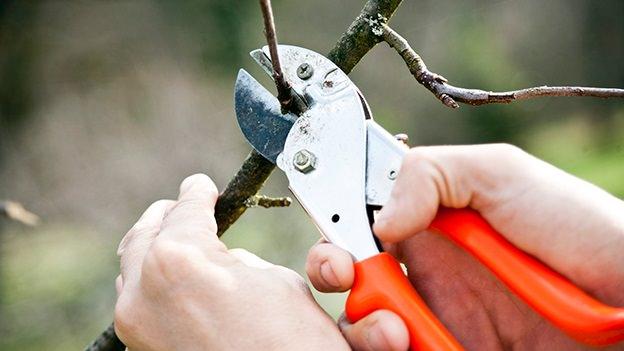 pruning, winter pruning