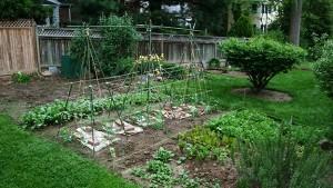 garden, soil test