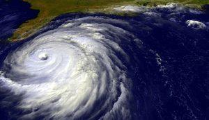 hurricane livestock
