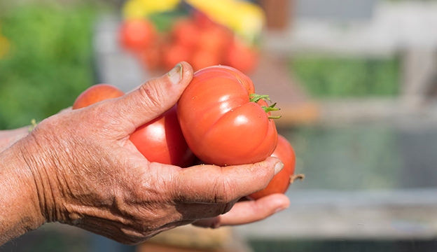 urban farming cred