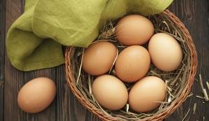 egg business