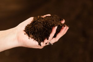 Compost makes a great soil amendment to help your crops grow organically.
