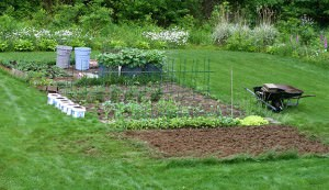 Use natural fertilizers for your organic garden.
