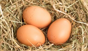 Three eggs in a nest box