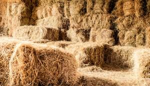 Haystack in the barn
