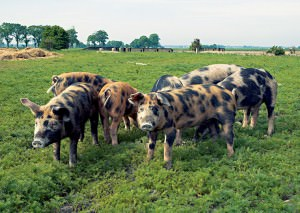 Before you bring animals to the farm, assess whether you have the infrastructure and skills to support raising livestock.