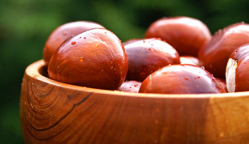 nuts grow farm chestnuts