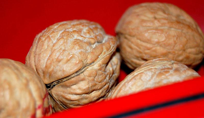 nuts grow farm walnuts
