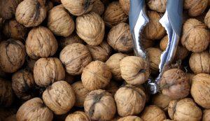 nuts nut trees walnuts