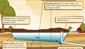 pond infographic