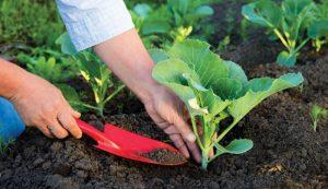 gardening tools hand trowel