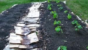 mulch, garden