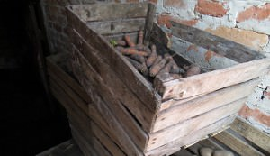Vegetables stored in a root cellar