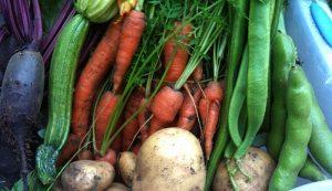 food independence vegetables harvest
