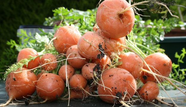 Paris market carrots
