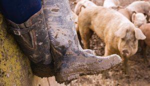 farm boots