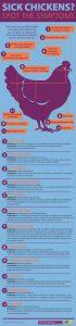 sick chicken infographic