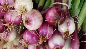 onion onions