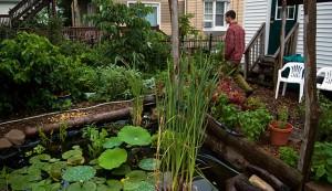 permaculture techniques