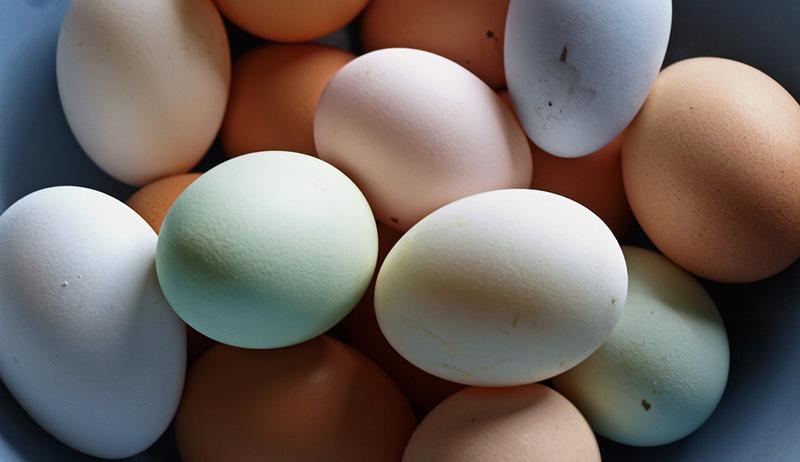 colored colorful eggs