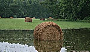 hay flood