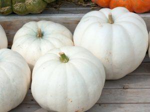 pumpkins lumina