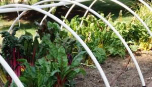 gardening, garden, tunnel, low tunnel