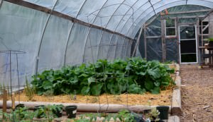 greenhouse, crops