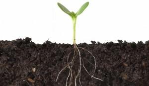 roots, soil