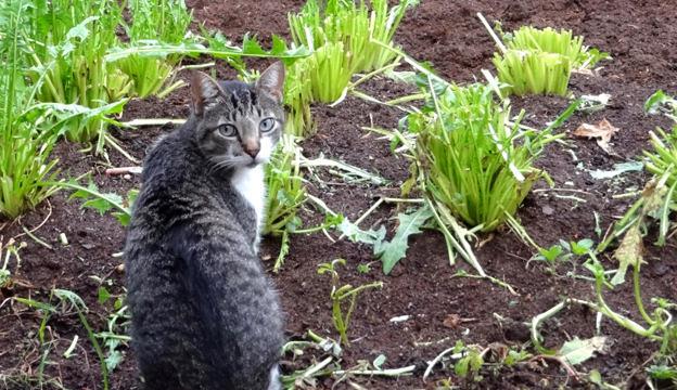 cat, garden