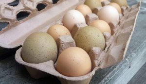 sell eggs money business poultry farming