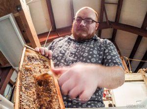 harvest honey crush and strain