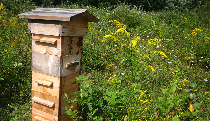 beehive hives bees warre hive