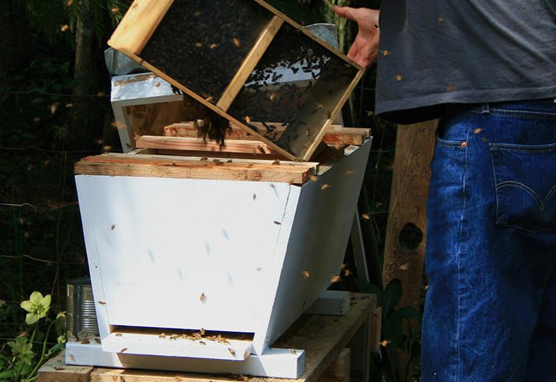 hives beehive top-bar hive bees