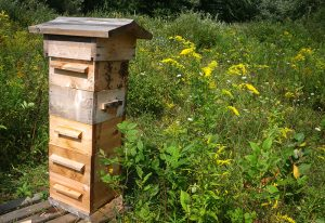 warre hive hives beehive bees