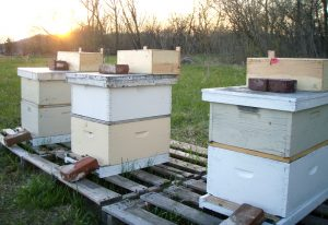langstroth hive hives beehive bees