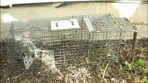 wildlife trap
