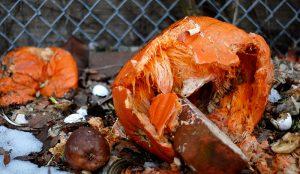jack-o-lantern pumpkin compost