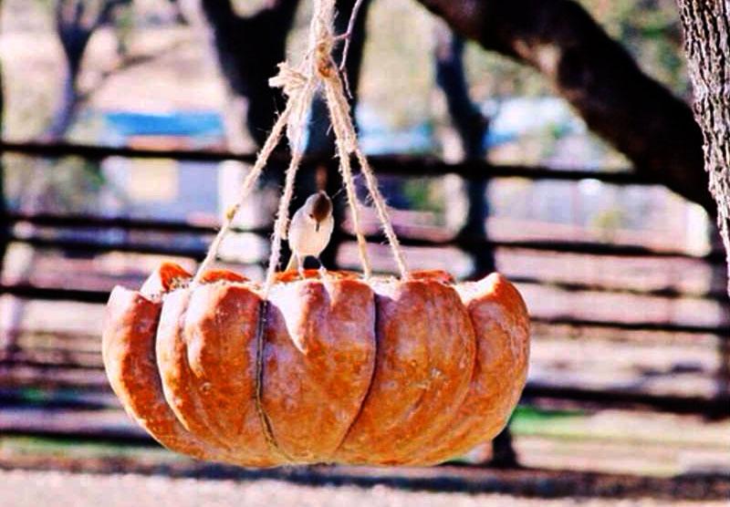 pumpkin jack-o-lantern bird feeder