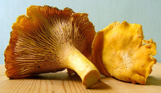 mushrooms, chantarelles