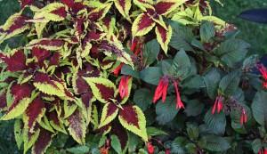 plants, potting soil uses