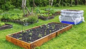 soil, garden bed