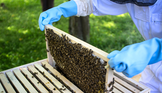 summer bees hive