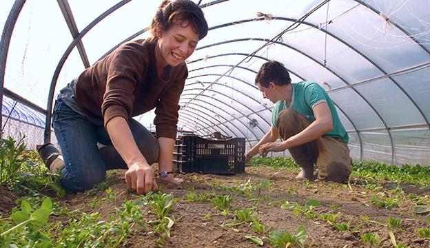 Farm cooperatives