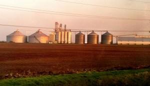 large corn field