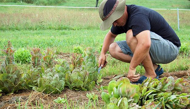 leasing farmland
