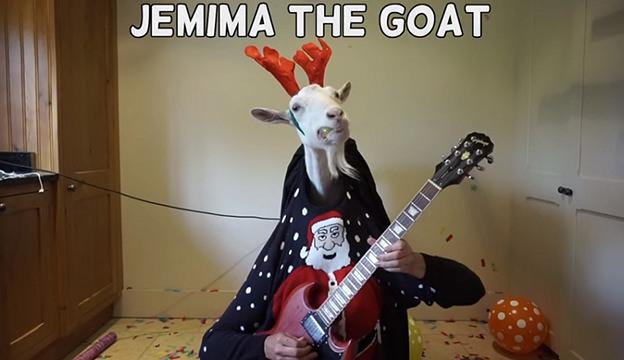 Jemma the Goat