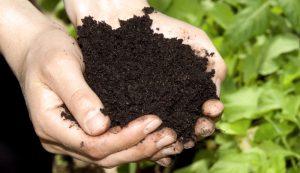 homemade fertilizer